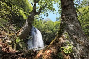 waterfall mountains forest