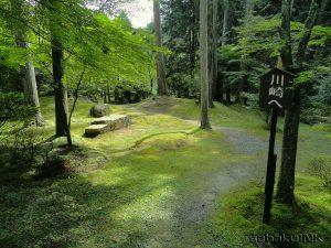 kawasaki woods