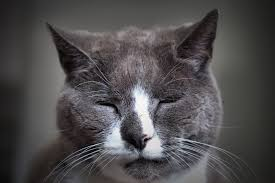Chronic kidney disease occurs in senior cats.